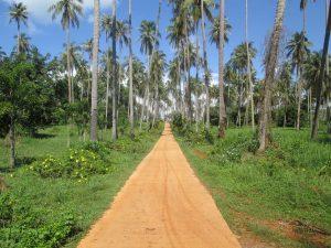 Koh Mak Paradise Walkway