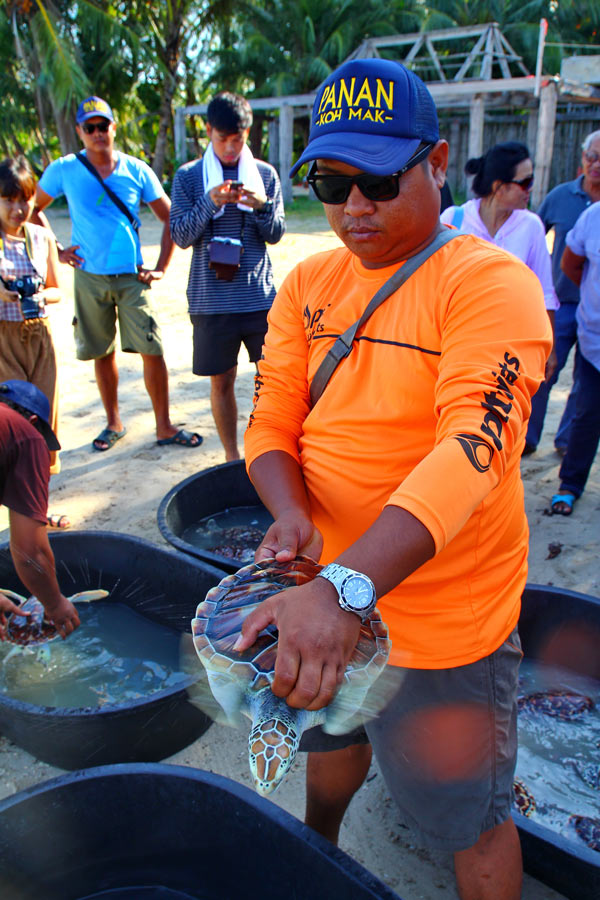 Sealife conservation center   Koh Mak turtles